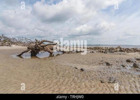 Driftwood Beach Jekyll Island Georgia USA - Stock Image