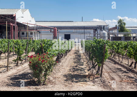 Winery Industry Santiago do Chile - Stock Image