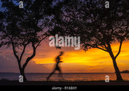 Silhouette of a man jogging between trees against a beach sunset. - Stock Image