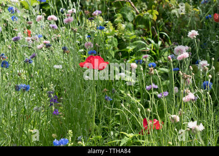 Wildflowers blooming on Governors island in New York harbor. June 15, 2019 - Stock Image