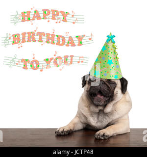 adorable cute pug puppy dog singing happy birthday to you, isolated on white background - Stock Image