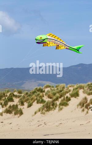 Fish shaped Kite flying over beach dune - Stock Image