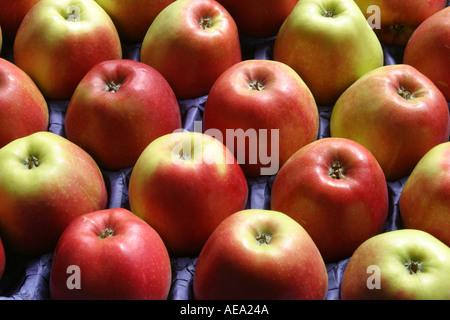 Red apples Braeburn apples in pattern in tray - Stock Image