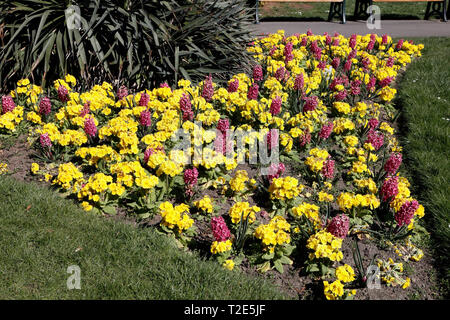 Flowerbed in Millhouses Park Sheffield - Stock Image