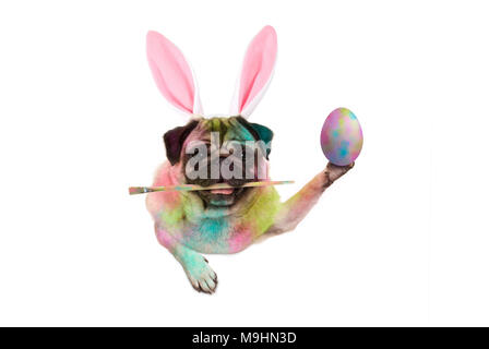 colorful easter pug dog bunny painting easter eggs, holding paintbrush, isolated on white background - Stock Image