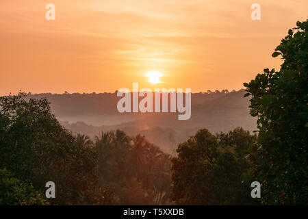 Beauty tropical trees in Arambol village in north Goa in India at sunrise - Stock Image