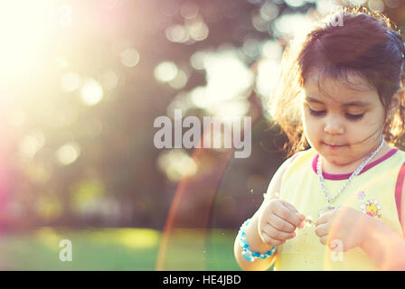 Toddler girl playing with dandelions during the golden hour - Stock Image