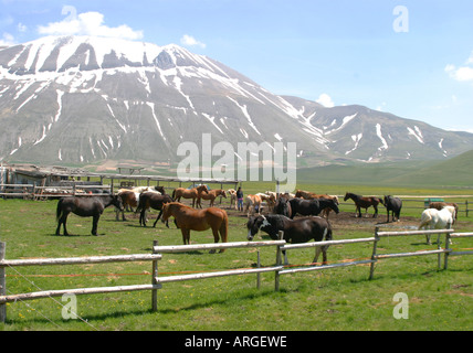 Horse riding is a popular activity in the Sibillini National Park in Umbria and Le Marche ,Italy - Stock Image
