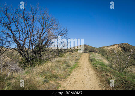 Brush grows alongside a hiking trail in the southern hills of Santa Clarita California. - Stock Image