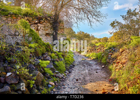 Dirt road stretching into the distance in a rural field surrounded by a stone wall, rocks, plants and trees of an autumn foliage color on a sunny day - Stock Image