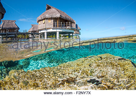 French Polynesia : corals and maxima clams in the lagoon, just below Tikehau Pearl Beach water bungalows - Stock Image