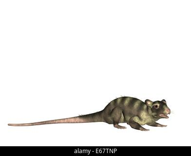 Pterodactylus / Pterodactylus - Stock Image