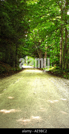 Vermont tree lined rural dirt road - Stock Image