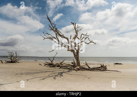 Jekyll Island Georgia USA Driftwood Beach - Stock Image