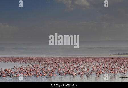 Landscape flamingos on Lake Nakuru, Kenya. Africa. - Stock Image
