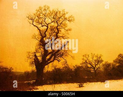 Winter landscape tree - Stock Image