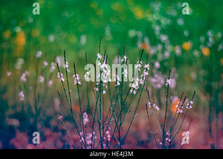 Moody green and purple wildflowers - Stock Image