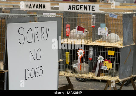 London & Essex Rabbit breeders and exhibitors event with the sorry no dogs sign - Stock Image