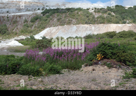 China clay spoil heaps, recolonisation beginning on old ones, St Austell Cornwall UK - Stock Image