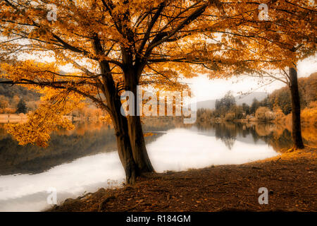 quiet landscape in a foggy afternoon of autumn on the Ghirla lake near the city of Varese - Stock Image