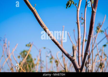 Photo of castor plant. - Stock Image