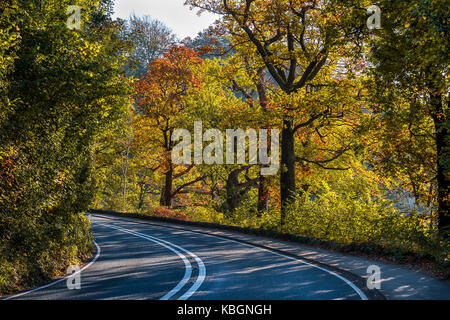autumn winding road,windermere,lake district,cumbria,england,uk - Stock Image