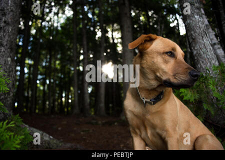 Dog In Tall Grass - Stock Image
