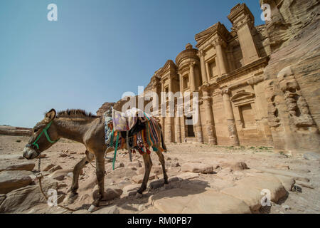 A Bedouin mule passes in front of the imposing ruins of the Monastery in Petra in Jordan. - Stock Image