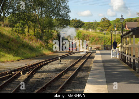 Great Western Engine approaches Devil's Bridge Station on the Vale of Rheidol Railway - Stock Image