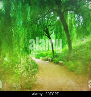Verdant green Parc de Bercy with weeping willow trees and fresh Spring foliage in Paris, France. Vintage texture - Stock Image
