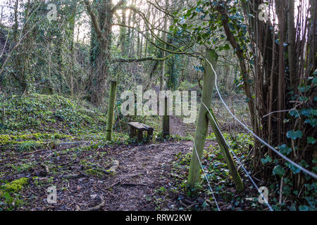 Path through woodland with an old stile over a fence - Stock Image