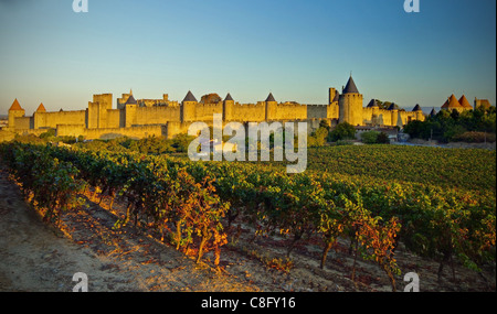 Vinyards and the old city of carcassonne - Stock Image