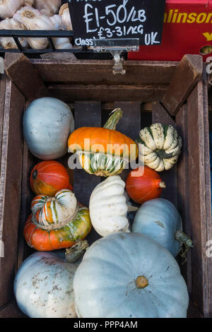 Assorted priced Squashes for sale in a greengrocers shop in North Yorkshire in autumn - Stock Image