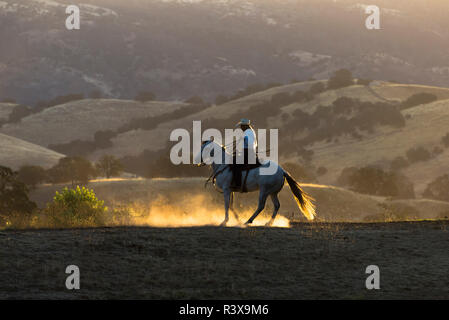 USA, California, Parkfield, V6 Ranch cowgirl on her horse kicking up dust at dawn (MR) - Stock Image