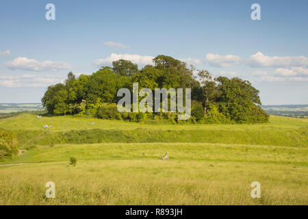 Walkers enjoy Castle Hill, Wittennham Clumps, Oxfordshire - Stock Image