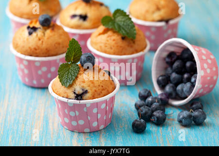 blueberry muffins in pink cases, fresh mint on blue wooden background - Stock Image