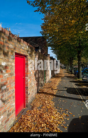 Fallen autumn leaves on a path behind terraced houses York North Yorkshire England UK United Kingdom GB Great Britain - Stock Image