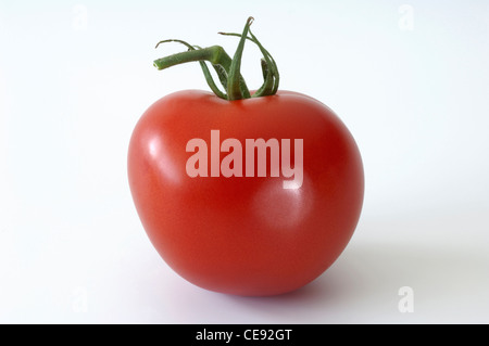 Tomato (Lycopersicon esculentum), ripe fruit. Studio picture against a white background. - Stock Image