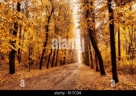 tree-lined avenue in the autumn on a foggy November afternoon - Stock Image