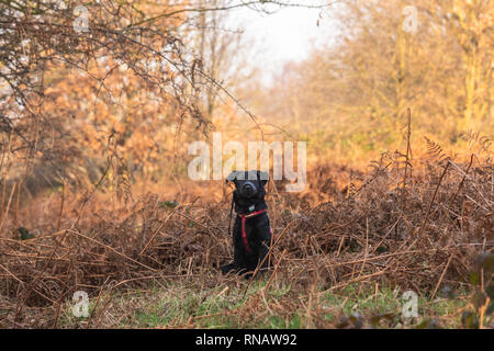 Puppy outdoors - Stock Image