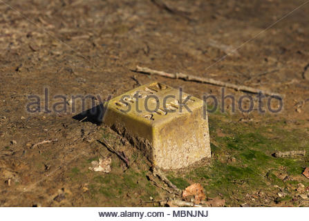 Cadastre concrete end point on ground in forest - Stock Image