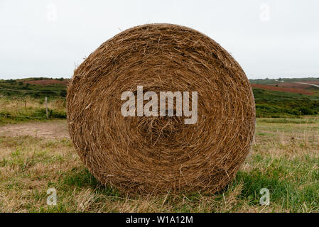 Field with hay bales after harvest in summer against cloudy sky. Full frame - Stock Image
