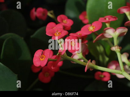 Soldier Ant perching on a petal of flower - Stock Image