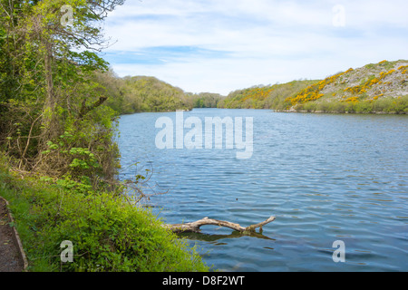 View of Bosherston Lily Ponds on the Pembrokeshire Coast National Park. - Stock Image