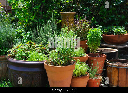 Various green sprouts and herbs in pots - Stock Image