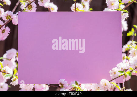 Pink paper blank between flowering almond branches in blossom. Pink flowers as a frame. - Stock Image