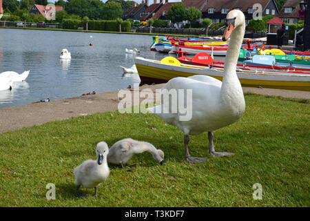 Thorpeness, Suffolk, England, UK - Stock Image