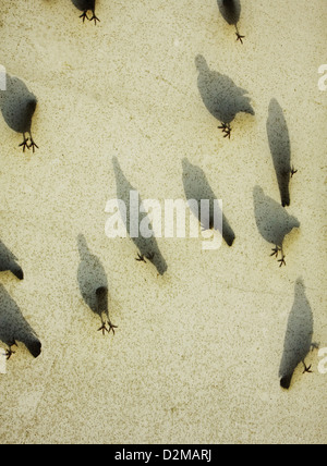shadows of birds on canvas awning - Stock Image