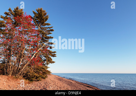Late fall view of trees and shoreline of Lake Superior, Northern Minnesota. - Stock Image