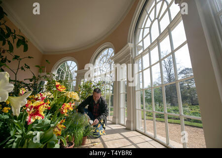 Head Gardner Andy Eddy works in the newly-restored Garden House at National Trust's Osterley Park and House in Isleworth, west London. - Stock Image